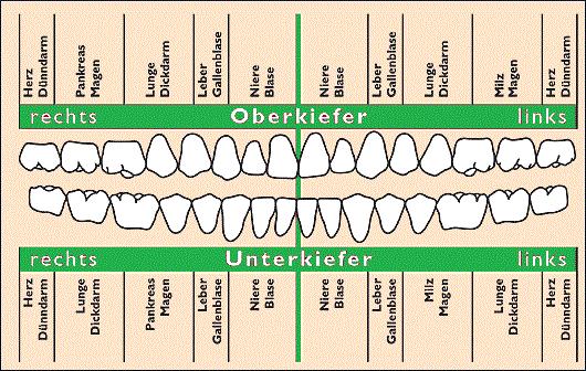 Zahnkinesiologie